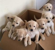 Putter Puppy